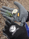 Gloved hands holding debris picked up from the beach, including a cigar tip, cigarette butt, bottle cap, and a piece of net
